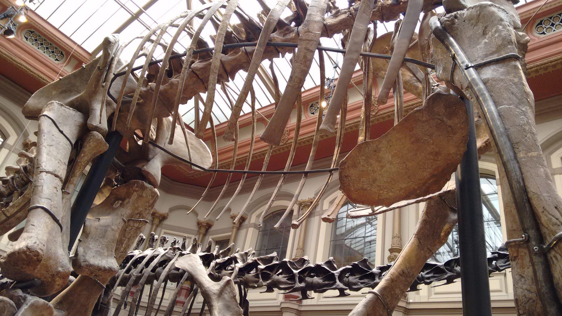 Les dinosaures de Berlin