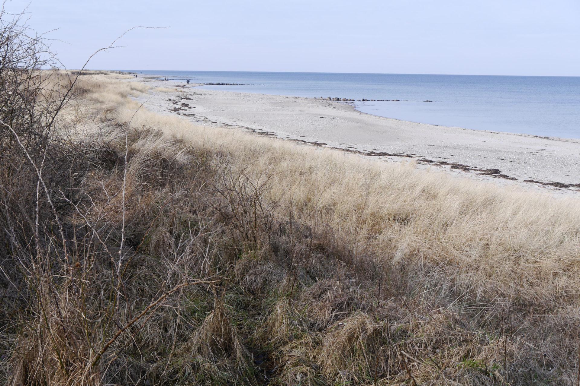 La côte sauvage de Behrensdorf